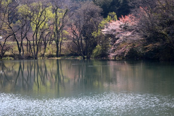 95堤の春景